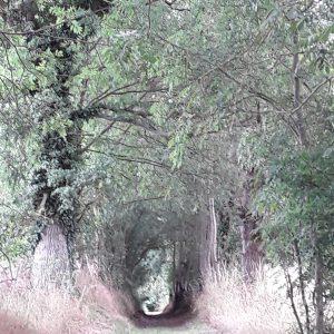 Les chemins de randonnées