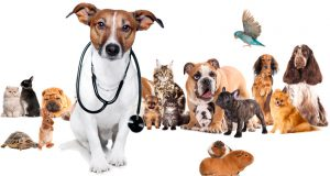 valdalliere, pratique, les, vétérinaires