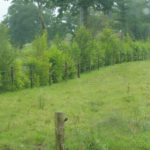 valdalliere-zone-de-revitalisation-rurale