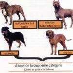 les-chiens-de-categorie