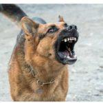 prevention-des-risques-canins